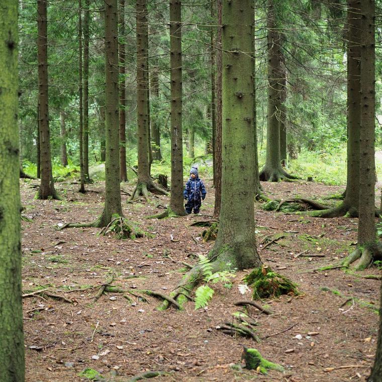 metsässä5
