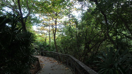 Berlayar Creek Boardwalk