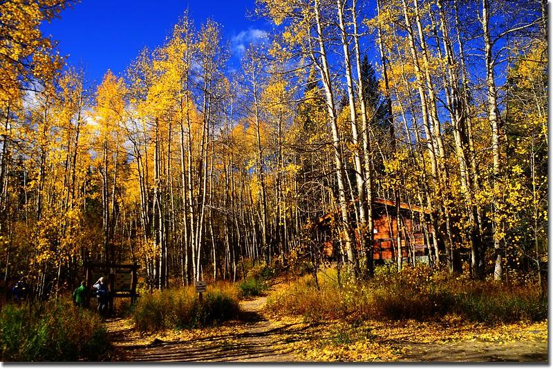 Fall colors, Mount Evans Scenic Byway, Colorado (21)