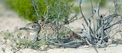 Houbara Fund - Houbarafund