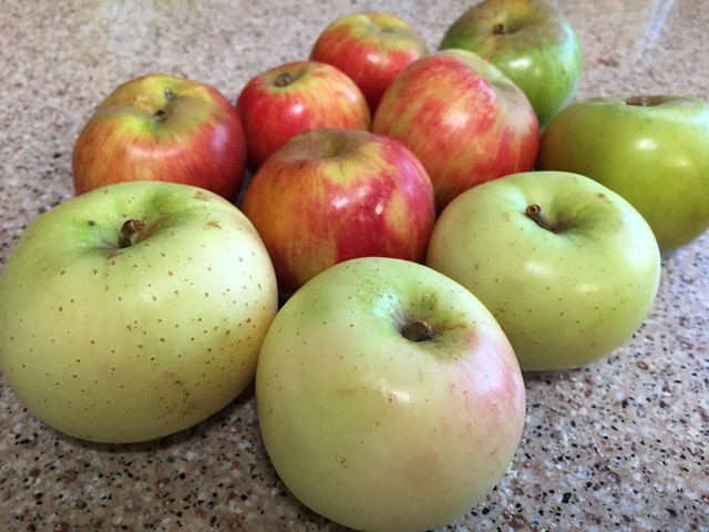 Today's apples (Winter Banana, Newton Pippin, Gravenstein)