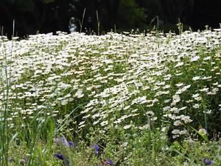 昭和の森 1 花々 10
