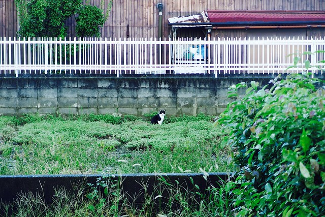 Today's Cat@2017-09-21