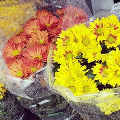 Rainy day mums outside @traderjoes