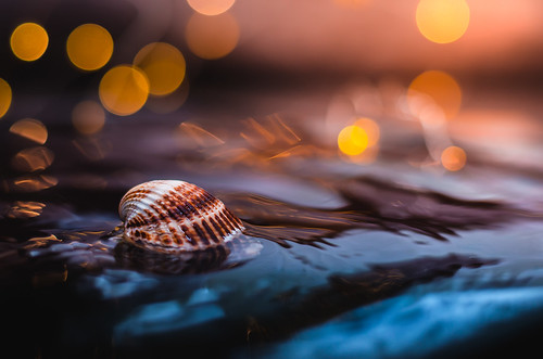Shell | Explored on 2017.10.01 | Thank you all!