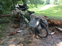 Tree Blocking Towpath at Monocacy Aqueduct