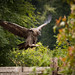 International Birds of Prey Centre (13)