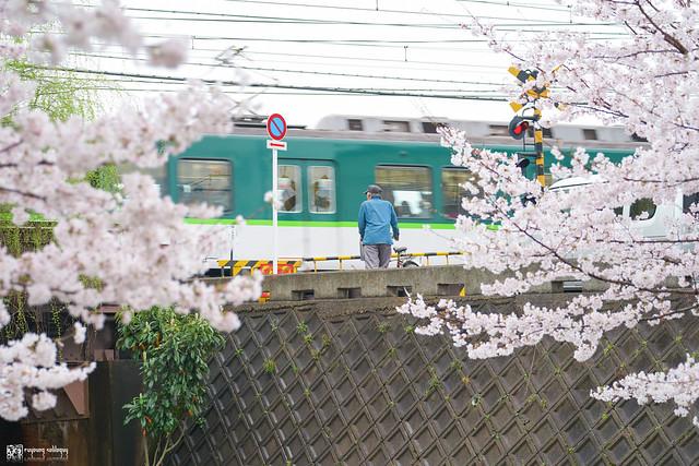 十年,京都四季 | 卷四 | 那兒春色滿城 | 10