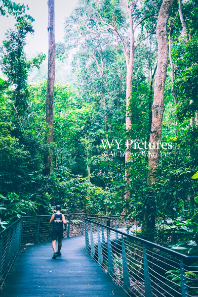Singapore 2017: Man Jogging In The Botanic Gardens