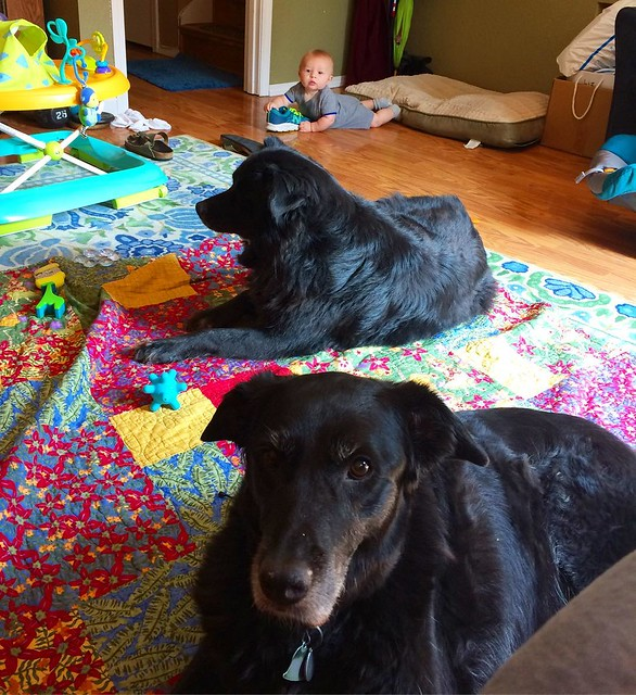 The dogs are relaxing on the quilt that I thoughtfully laid out for the baby, meanwhile the baby is chewing on my shoe laces. Gross.