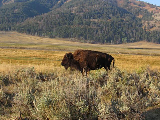091217 Yellowstone (3)