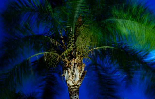 Palm Tree, Nikon D7200, AF-S Nikkor 50mm f/1.8G