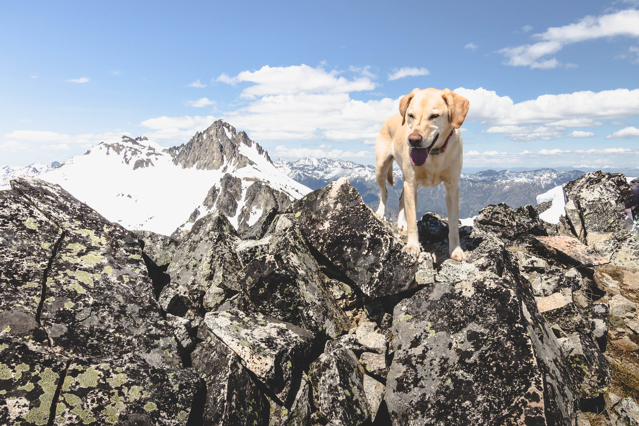 Summit dogs on Carmels Hump