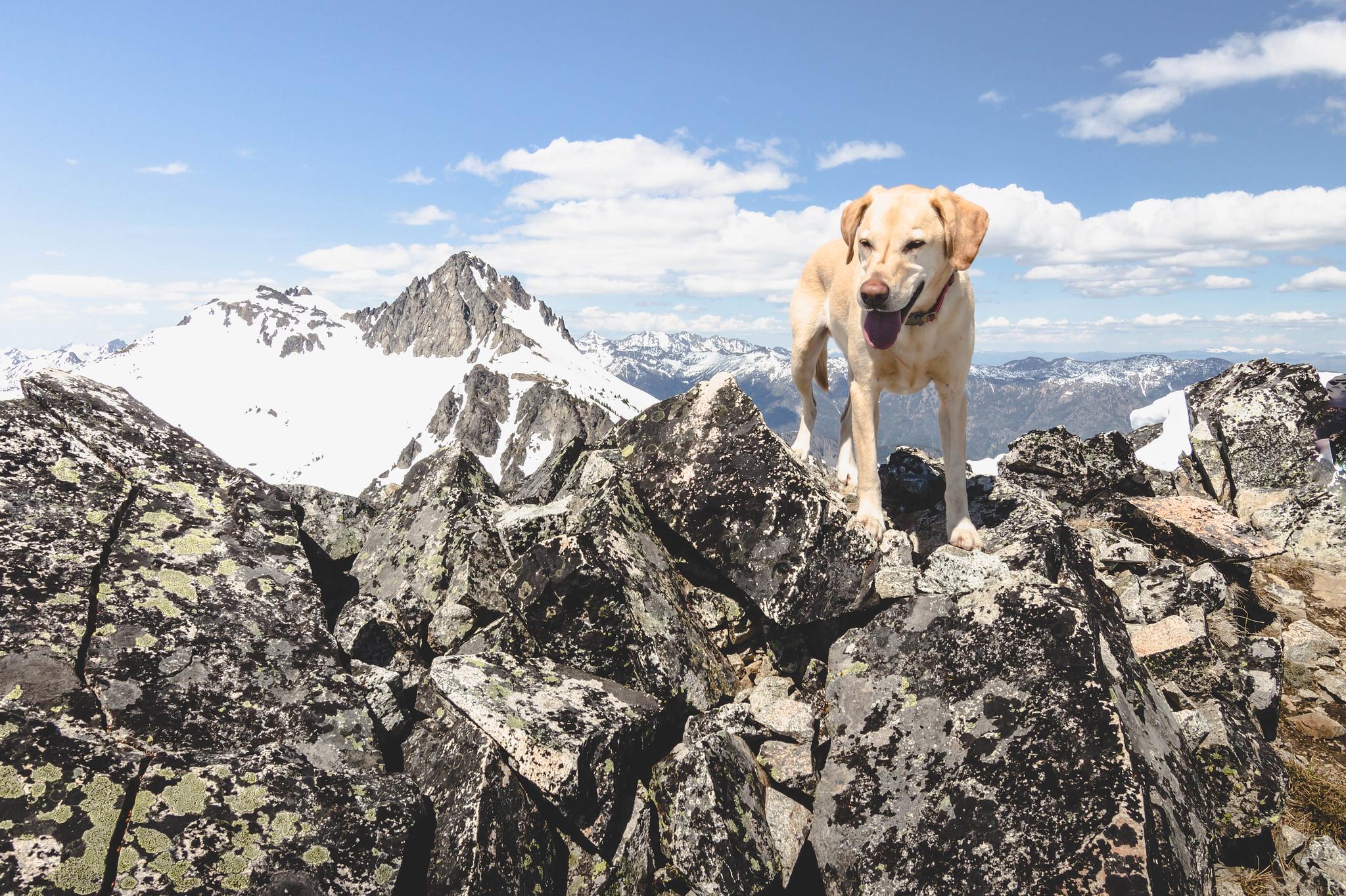 Summit dogs on Carmels Hump