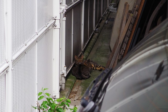 Today's Cat@2017-08-11