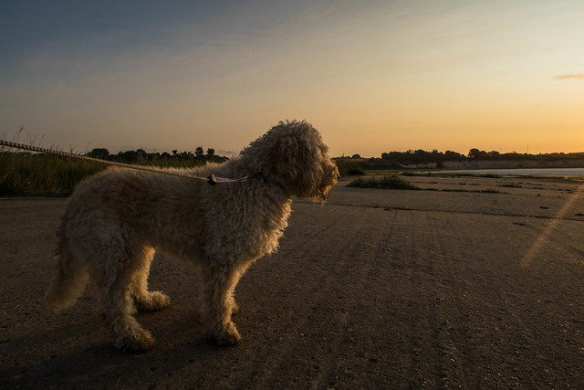 Dizzee sunrise, Canon POWERSHOT G7 X MARK II