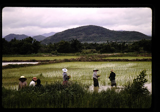 田植え風景