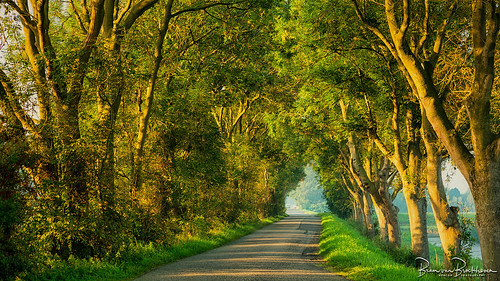Morning light on a country road