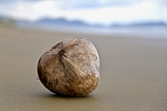 missing coconuts