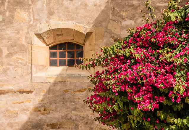 window and bougainvillea