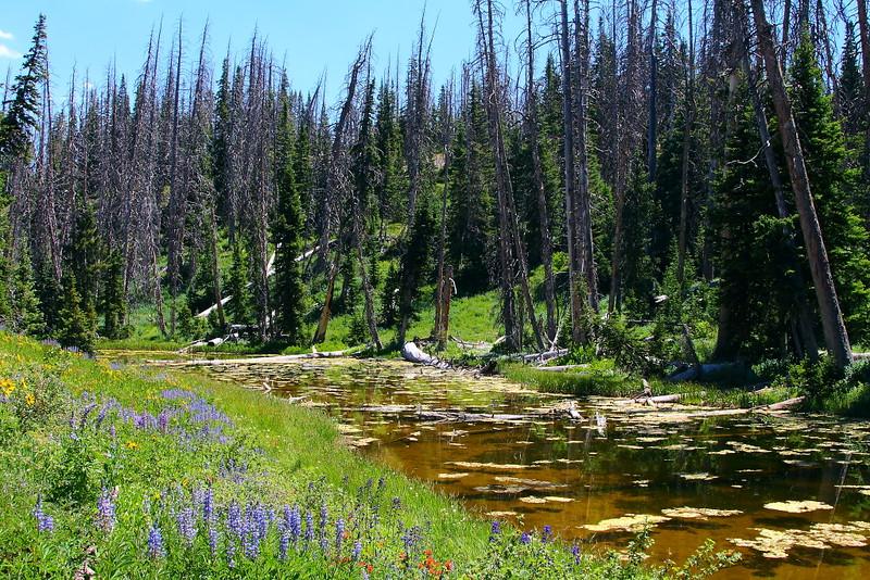 IMG_4988 Alpine Pond Trail