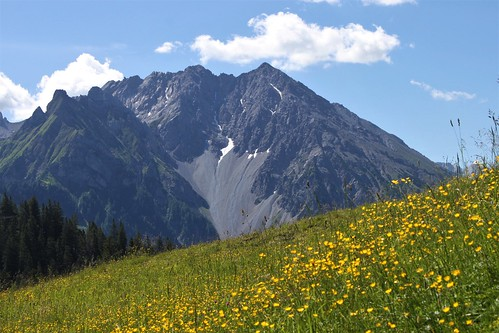 yellow flowers and alps in background
