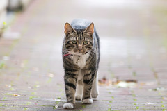 The cat in the alley