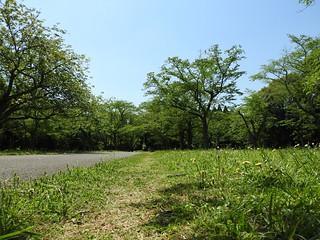 昭和の森 5 四季の道 05