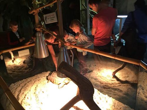 У зоопарк— на нічну екскурсію