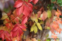 automne