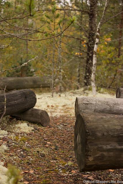 Polvijärvi Sola 2017 Syksyllä syksy syksyn tulo Sotkuma Visit Polvijärvi Solan metsäkirkko kuvauspaikka sumuinen päivä