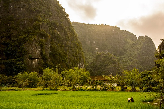 Ricefields of Ninh Binh