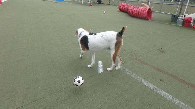 08_18_17 Soccer Activity Play :-)