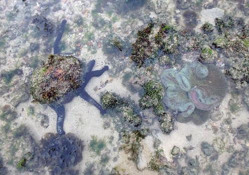 Various marine life at Pulau Tekukor