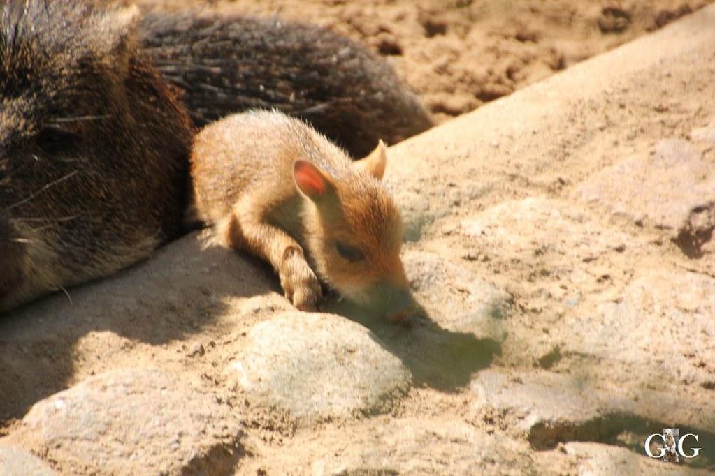 Besuch Zoo Berlin 13.08.17162