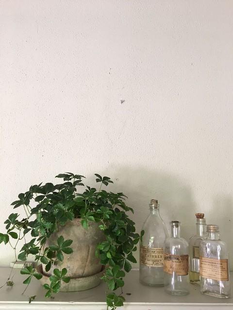 Plant met flesjes