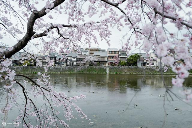 十年,京都四季 | 卷四 | 那兒春色滿城 | 01