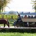 Marche truffes Bonvillars_2013_caleche_4