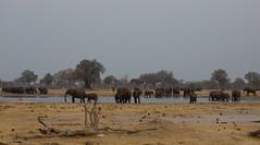 Elephants, elephants, elephants