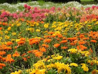 昭和の森 1 花々 05