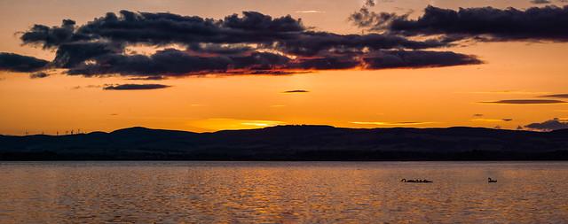 Swans at Sunset, Nikon D7200, Tamron SP AF 150-600mm f/5-6.3 VC USD (A011)