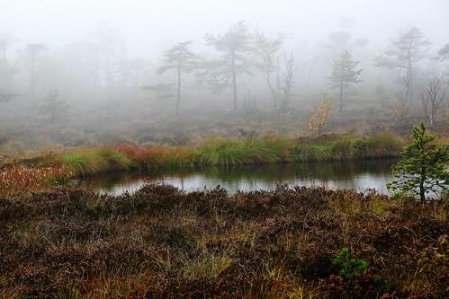 Ein Nebeltag im Moor - A foggy day in the high moor