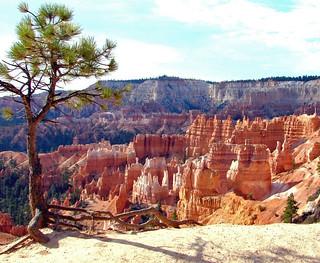 Life on the Edge, Bryce Canyon, UT 9-09