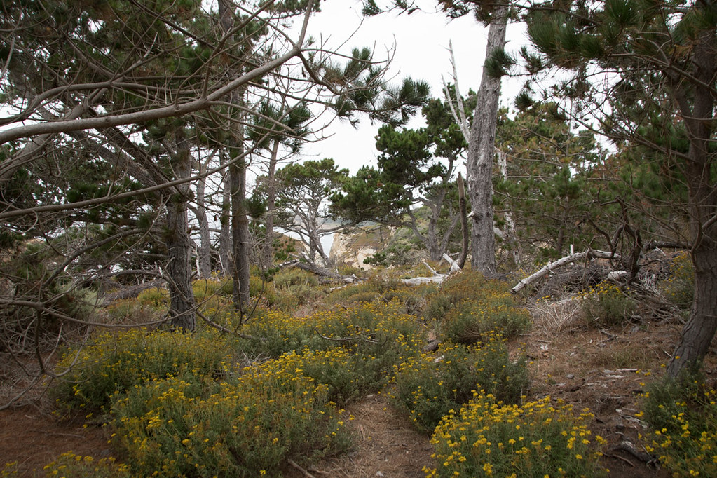 Bird Island Trail | Point Lobos State Reserve