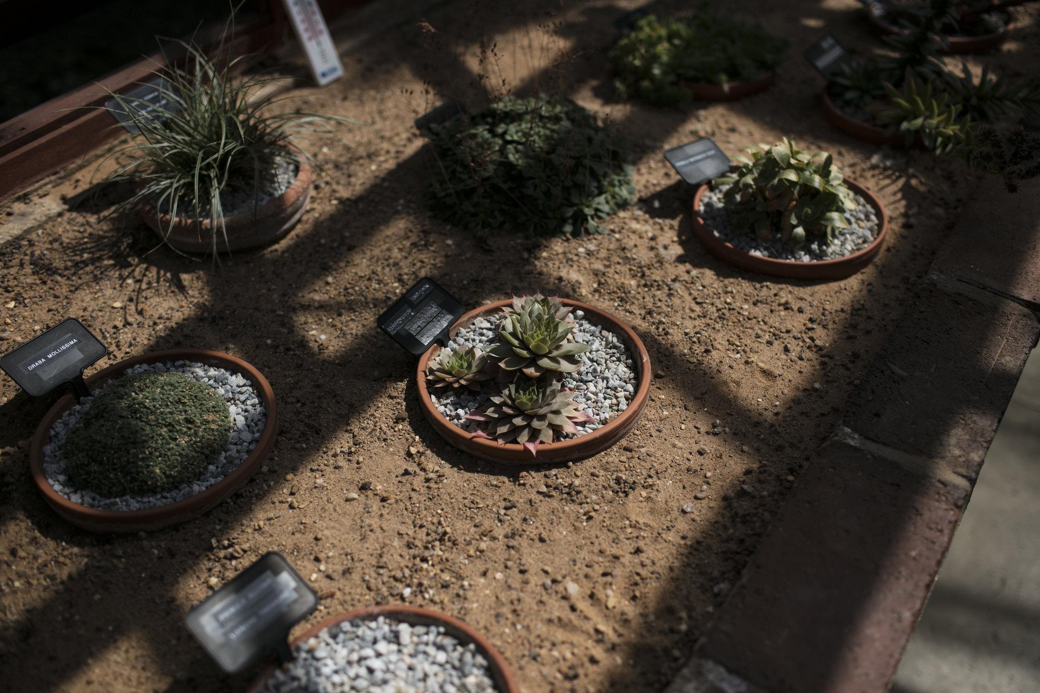 Jordan_Bunker_botanical_gardens_9