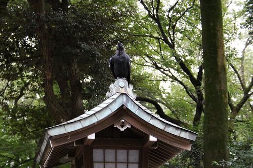 Meiji Jingu raven