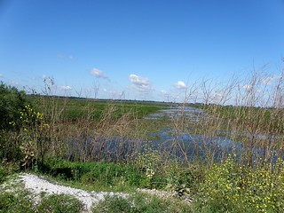 Cedar Point Wetlands by Penny O'Connor