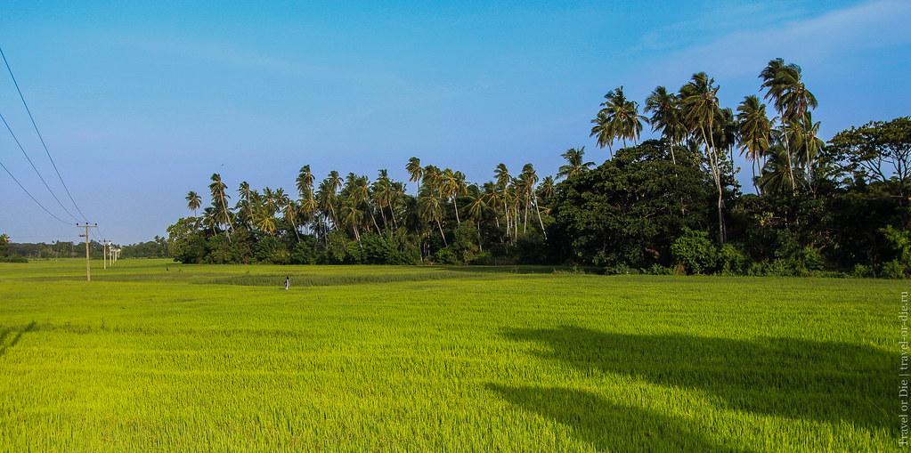24.06-Tissamaharama-Sri-Lanka-canon-1500px-011
