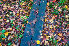 Oberg Boardwalk Autumn