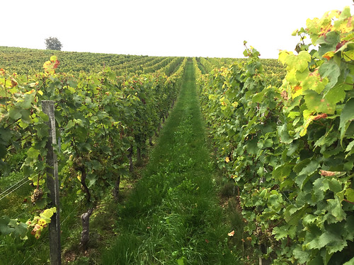 07 - At the vineyard / Im Weinberg